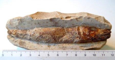 Mineralienstufe und Fossil erkennen