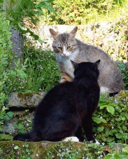 Katzenfreunde hier?