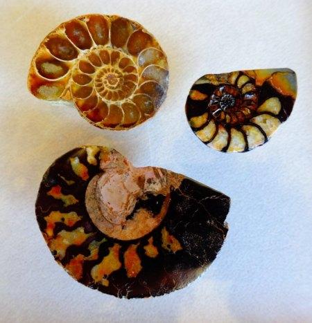 Ammonit-Pärchen aus Goldschmiede zu verkaufen